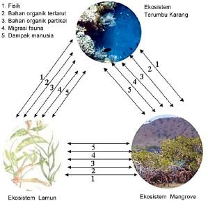ekosistem-pesisir
